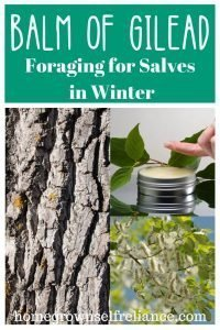 Balm of Gilead - Foraging for salves in winter