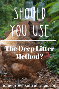 Should you use the deep litter method with your chickens? It might not be for everyone, but I LOVE it! Read all about it here. #backyardchickens #chickens #deeplitter #fresheggsdaily