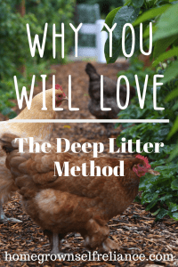 Have you tried the deep litter method with your chickens? Try it, you might fall in love with it! Read all the details about it here! #backyardchickens #chickens #deeplitter