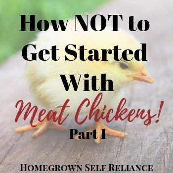 Chick - How NOT to get started with meat chickens - part 1