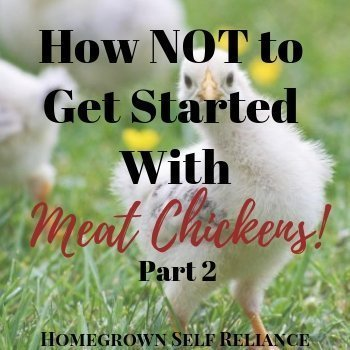 Chicks - How NOT to get started with meat chickens part 2