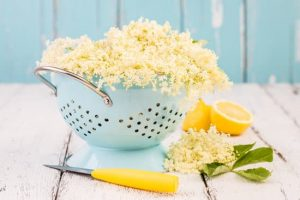 Elderflowers in colander with lemon