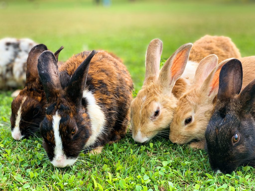 Meat rabbits are great for self reliance
