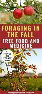 Do you like the idea of free food and medicine? You should try foraging! Here are some things you can forage in the fall for free food and medicine. #diyhealth #freefood #diymedicine