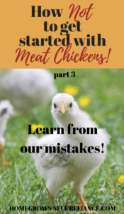 How NOT to get started with meat chickens - part 3. Learn from our mistakes!