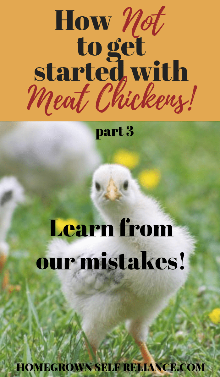 meat chickens, How NOT to get started with meat chickens (pt. 3)!