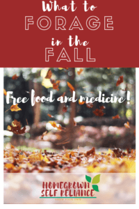 How would you like free food and medicine? Check out this post to find out what you can forage in the fall!