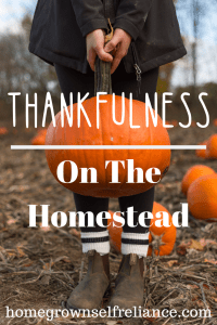 It's Thanksgiving! What are you thankful for? Here is a roundup post that I did with my blogger friends. Be sure and check out what we each are thankful for, on our homesteads! #thanksgiving #thankful #givethanks #homestead