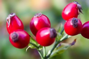 Rose hips are a great natural source of Vitamin C. This makes them a wonderful immune booster. Make some tea out of them to help you recover from the cold faster.