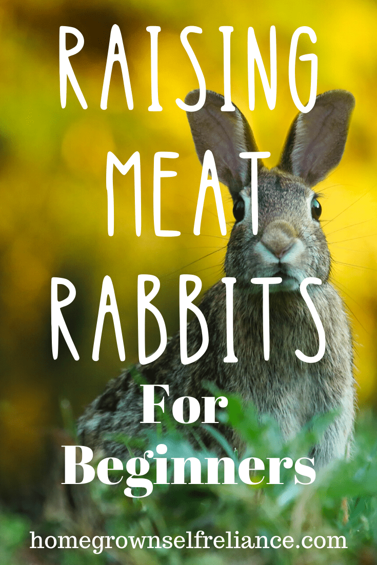 Raising meat rabbits is a great way to increase your self reliance! Consider raising rabbits to feed your family delicious, homegrown meat any time of the year! #meatrabbits #selfreliance #homesteading