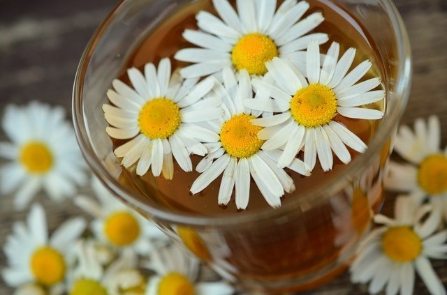 Growing and using chamomile