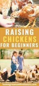 Do you want to raise chickens, but don't know where to start? Start here, with our best tips on basic chicken keeping! #chickens #fresheggsdaily