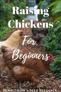 Do you want chickens, but don't know where to start? Here is a great starter's guide to chickens! #backyardchickens #chickens #fresheggsdaily #farmlife