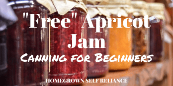 Apricot jam - canning for beginners