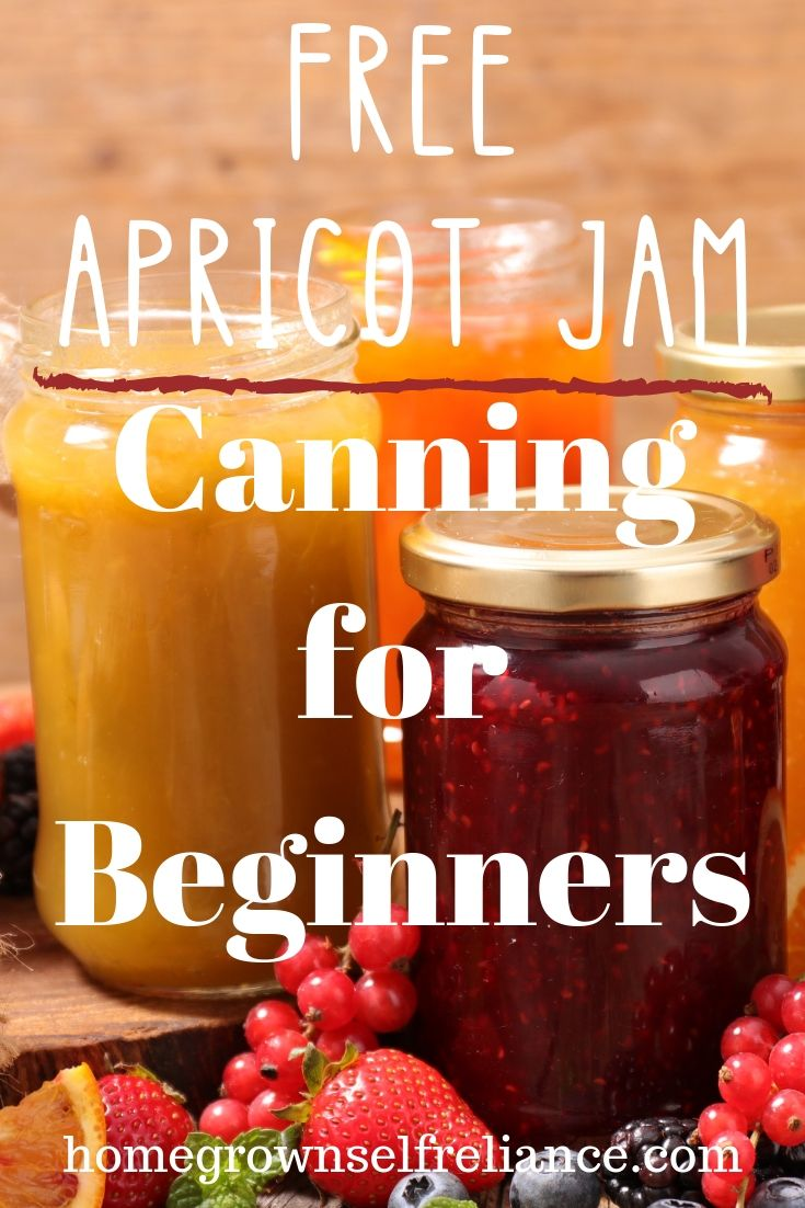 apricot jam, Free Apricot Jam – Canning for Beginners