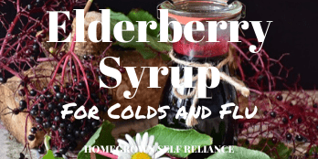 Elderberry Syrup for colds and flu