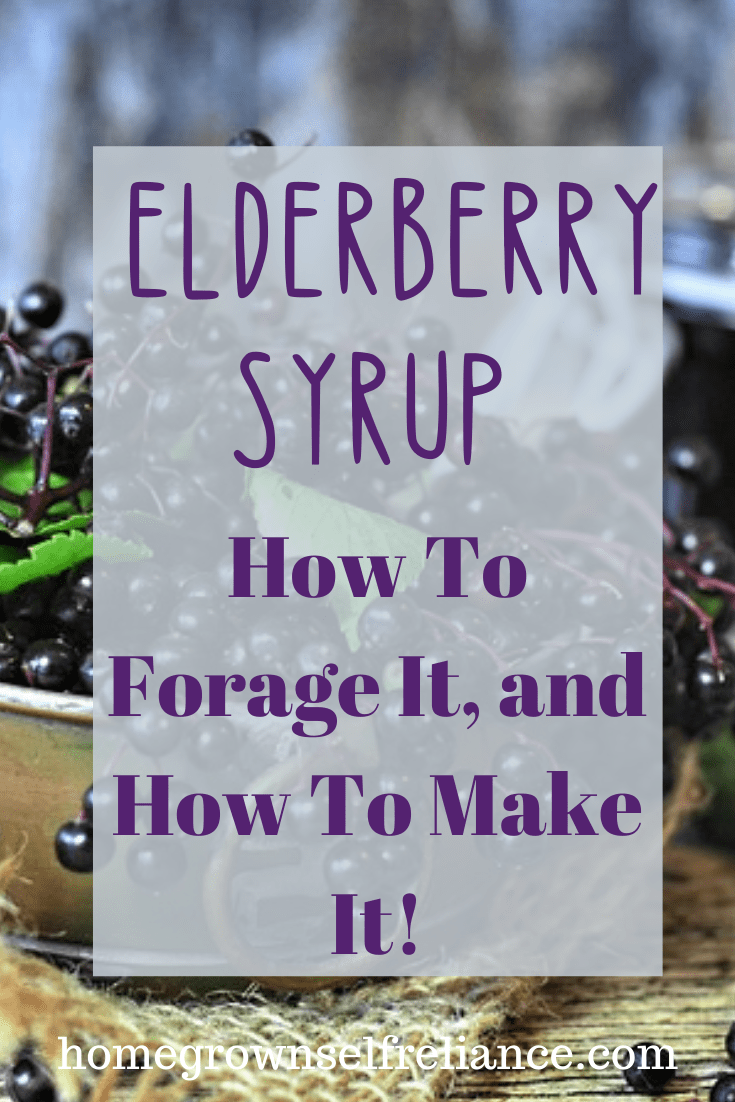 Have you ever made elderberry syrup? It's a delicious medicine for any cold or flu. Find out how to forage your own elderberries and make your own medicine! #diyhealth #foraging #elderberry