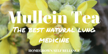 Mullein tea for lung health