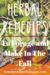 Vinegar carafe - Herbal remedies to forage and make in the fall