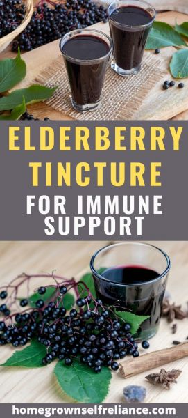 Do you need some serious immune support? Have you tried elderberry tincture? Here is the best recipe for elderberry elixir, plus ways to boost it even more! #elderberry #tinctures #diyhealth