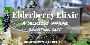 Elderberry Elixir - a delicious herbal gift