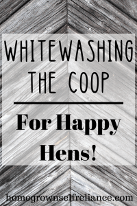 Have you ever considered whitewashing your coop or barn? You should - it's got lots of great benefits. Check it out here! #chickens #backyardchickens #farmlife