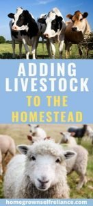 Do you want to add livestock to your homestead? Here are the best tips and tricks for choosing the livestock that best fits your farm size! #farmanimals #farmlife