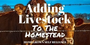 Adding livestock to the homestead