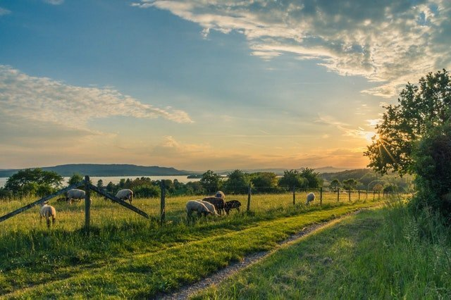 Adding livestock to the homestead - check your pastures