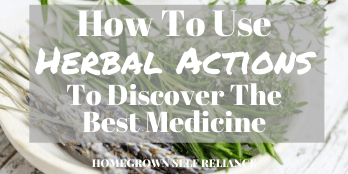 How to use herbal actions to discover the best medicine