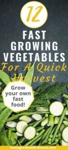 Do you need to grow some food fast? Here are 12 of the best fast growing vegetables, so you can get a harvest sooner. #gardening