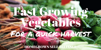 Fast growing vegetables for a quick harvest