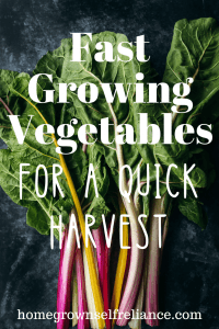 Do you need some veggies, fast? Here are the best fast growing vegetables, to get you a quick harvest! #gardening #selfreliance