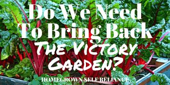 Do we need to bring back the victory garden?