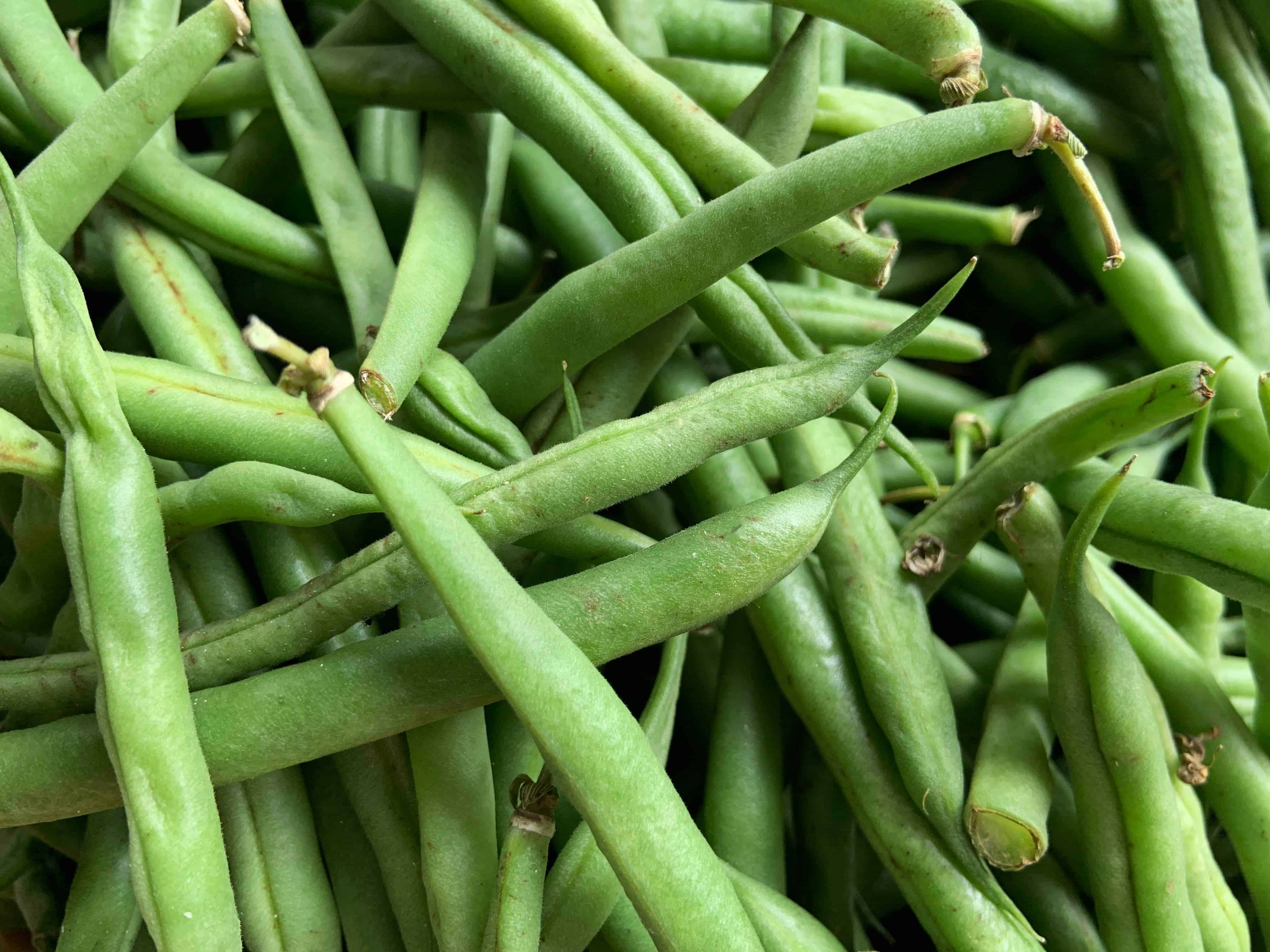 Green beans are productive fast growing vegetables