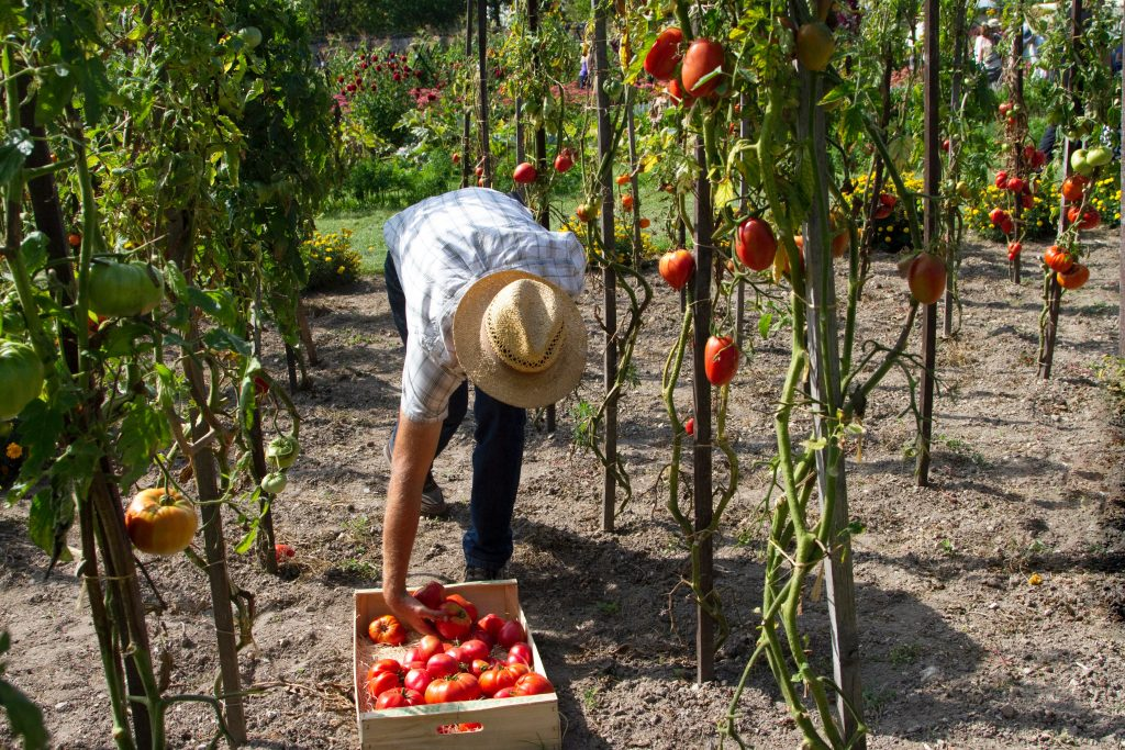 Gardening for food security