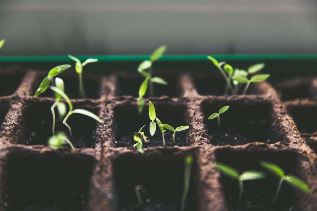 Starting seeds for food security