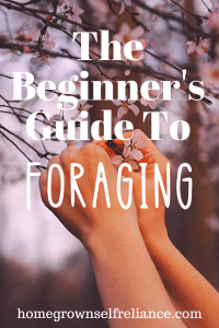 Do you want to go foraging, but it makes you nervous? Never fear! This will help you know how to become a foraging pro! #foraging #freefood #wildfood