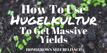 How to use hugelkultur to get massive yields