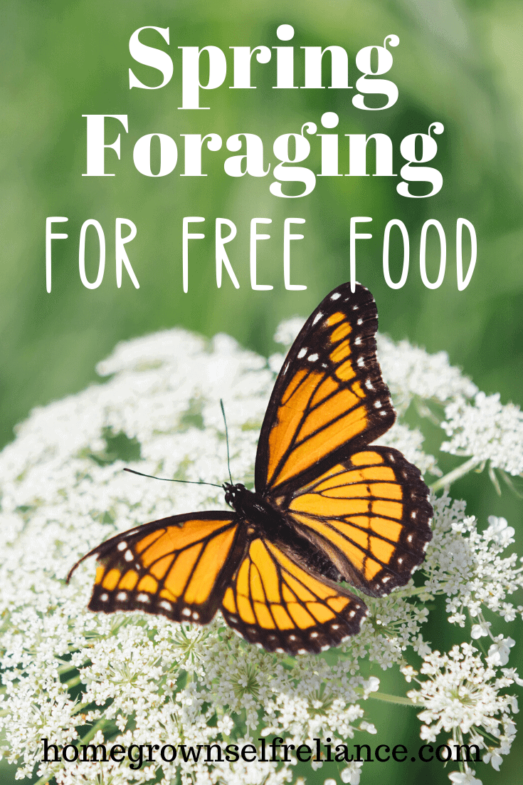 foraging, Spring Foraging for Free Food