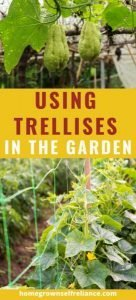 Do you want to get more vegetables out of your garden space? Look into using trellises in the garden! Here we have the benefits of using trellises, plus a list of vegetables that do better when grown on a trellis! #gardening #vegetablegardening