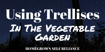 Using trellises in the vegetable garden