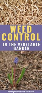 Weed control is so important in the vegetable garden. But how do you stay on top of the weeding when you have so much other stuff to do? Here are our best tips for weed control.