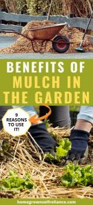 Do you use mulch in the garden? Here are 9 great reasons why you should! #gardening #growyourownfood