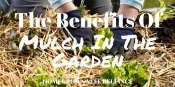 The benefits of mulch in the garden
