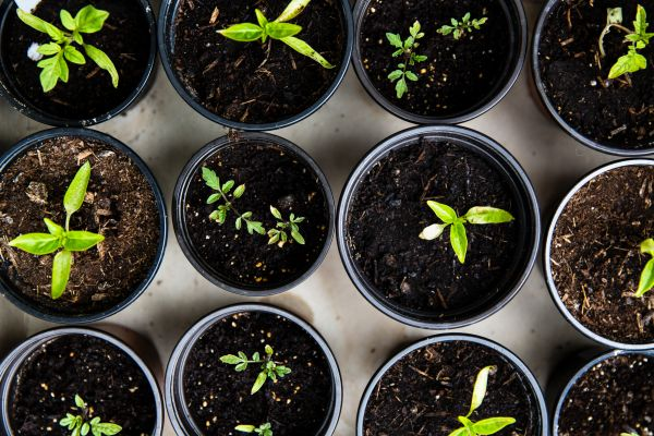 Start homesteading by growing some of your own food