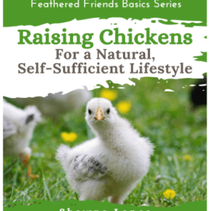 Raising chickens for a natural, self-sufficient lifestyle