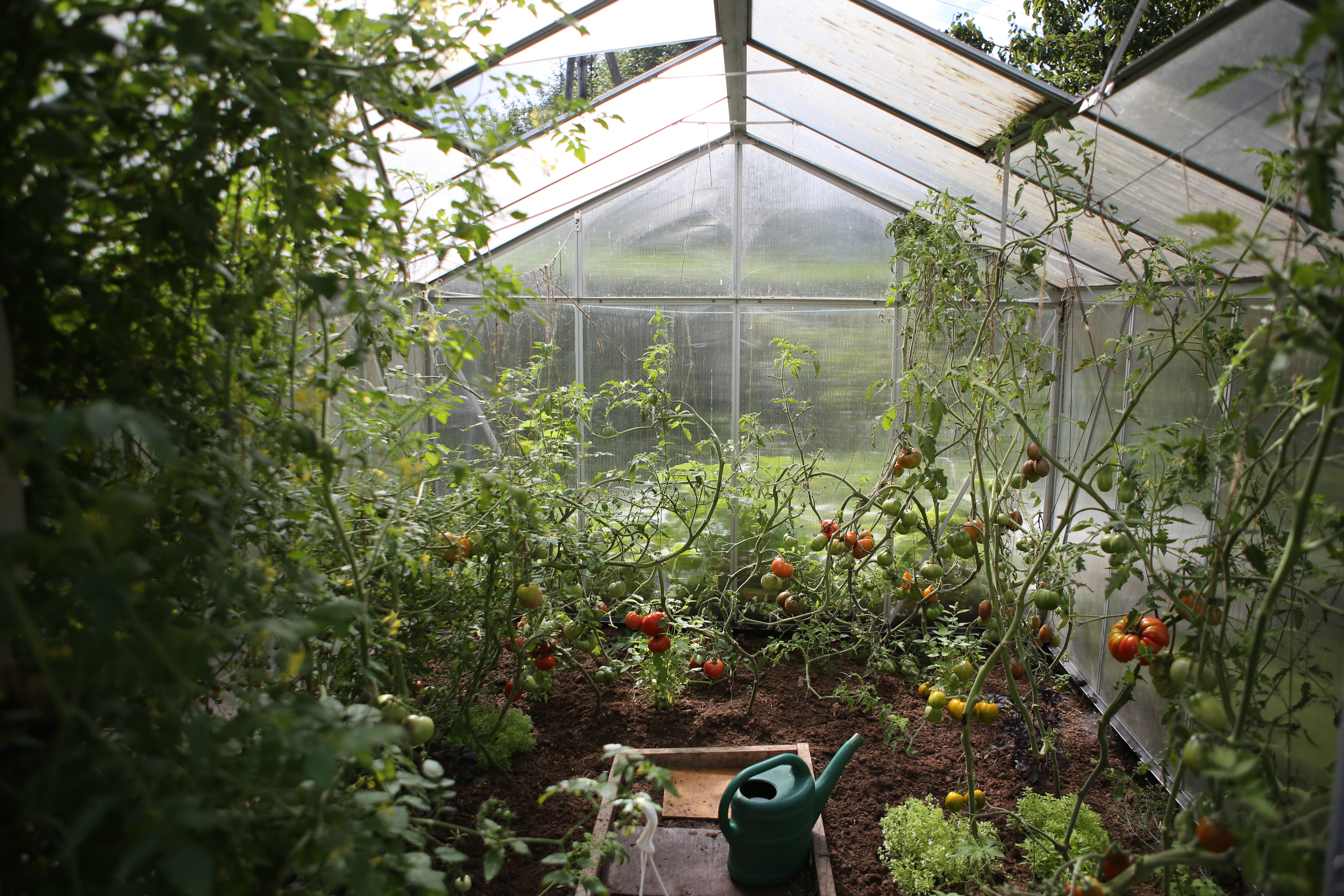 Use greenhouses to get another harvest after garden failures