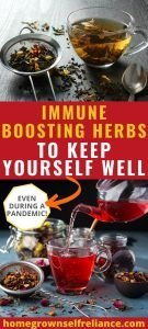Immune boosting herbs to keep yourself well