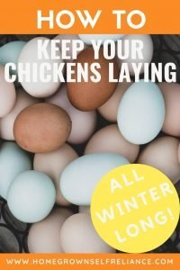 How to keep your chickens laying in winter